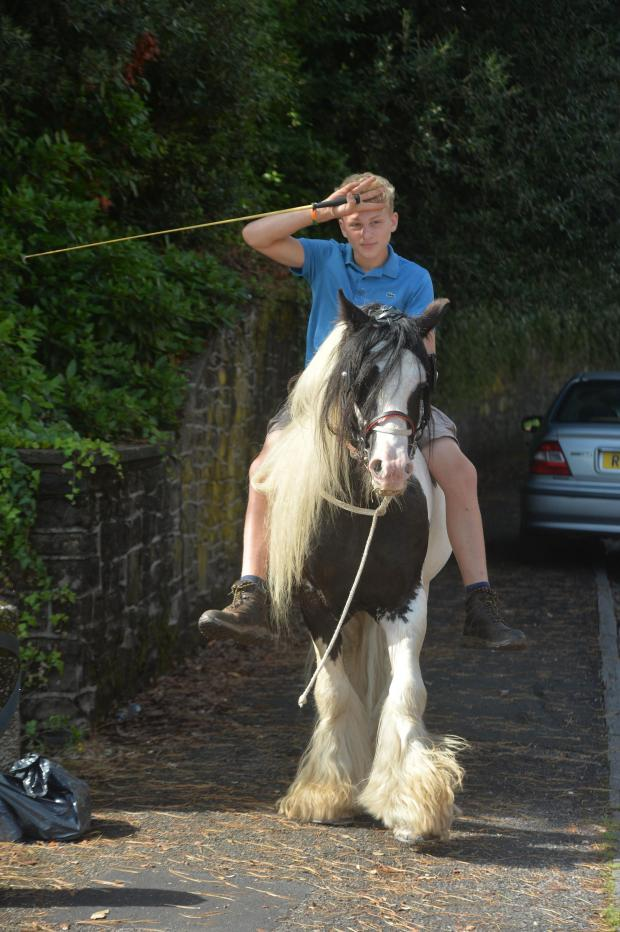South Wales Argus: Seagul on Good Horse during the peaceful protest at Newport Civic Centre by Gypsies from Brickyard Lane.