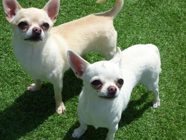 Five-year-old Nacho (back) and three-year-old Salsa are looking for a new home