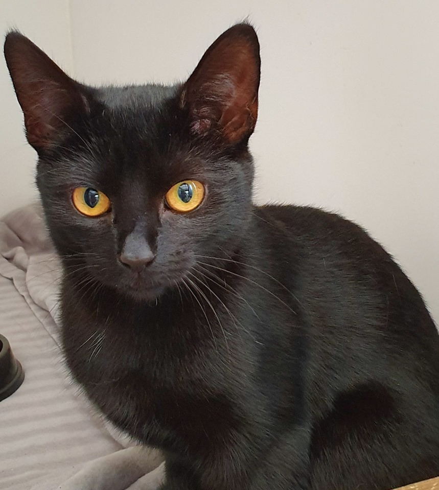 CAT OF THE WEEK: Puddles needs a new home