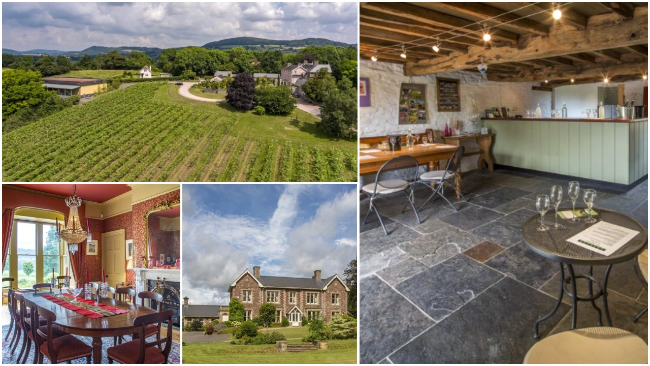 Award-winning Ancre Hill vineyard in Monmouth up for sale