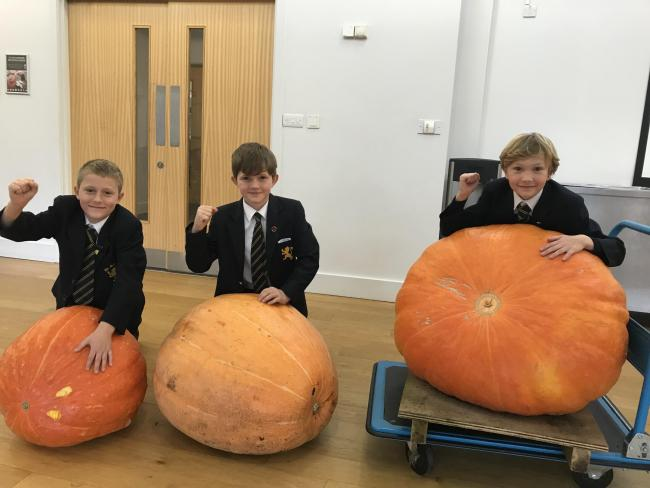(L-R) Third-placed Tom Butt, second-placed Rafe Llewelyn, and champion grower Drew White - all of Monmouth School Boys' Prep - with their huge pumpkins.