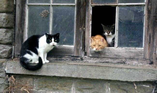 Gwent Cats Protection Seeks People To Keep Tabs On Feral Cats South Wales Argus