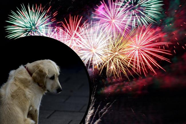Council to debate motion to restrict fireworks over animal protection concerns. Stock pictures: George Hodan (inset)/Anna-Louise/Pexels (main)