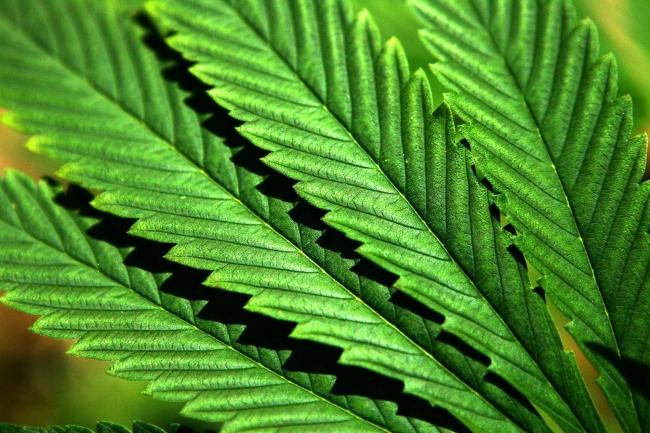 First safety warning issued over CBD products