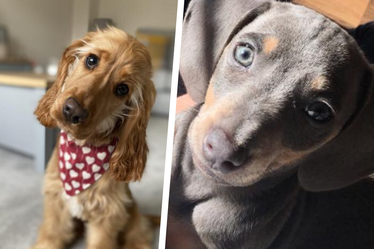 Top five: Gwent's cutest dogs