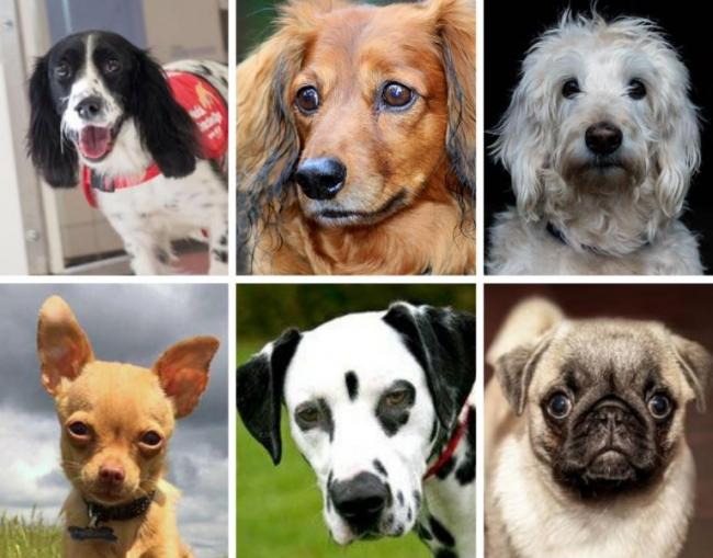 Would you pay £2,250 for a puppy? Here's a full list of Britain's priciest dogs