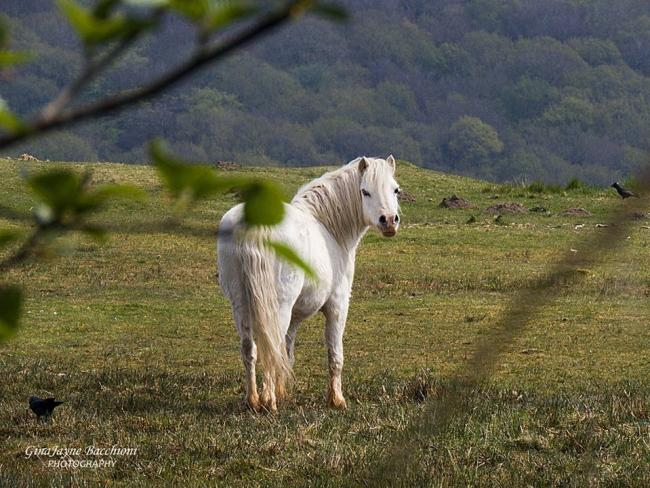 POSE: A pony in Varteg. Picture: South Wales Argus Camera Club member Gina Bacchioni