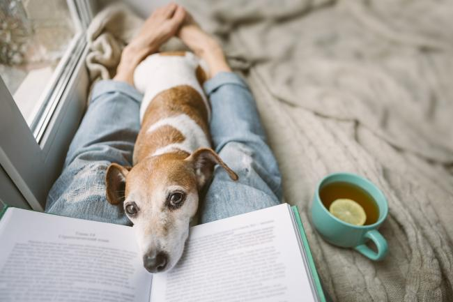 Reading at home with pet Jack Russell terrier. Cozy home weekend with interesting book, dog and hot tea. Beige and blue. Chilling mood.