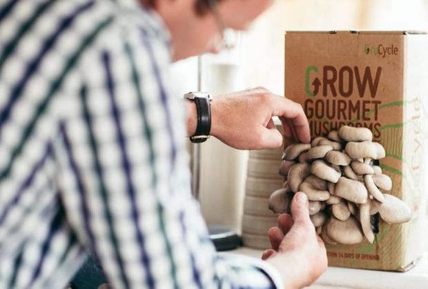 South Wales Argus: A mushroom growing kit is a fun gift for dads who enjoy gardening. Credit: Fungi Futures