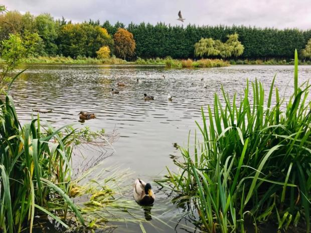 South Wales Argus: Cwmbran Boating Lake. Picture: South Wales Argus Camera Club member Marie Coombes