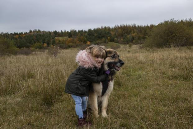 South Wales Argus: Harrie age 3 and Hendrix the German shepherd cross age 7