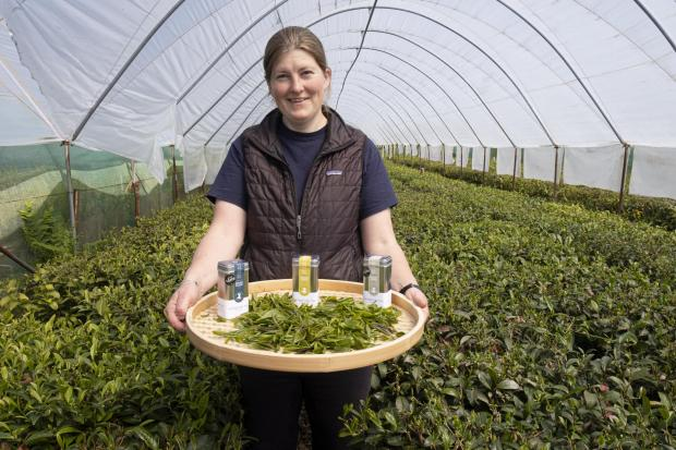 South Wales Argus: Lucy George of Peterston Tea Estate
