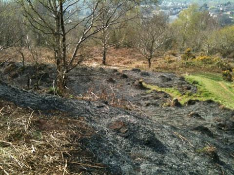 TORCHED: The scene after the Gaer grass fire was put out