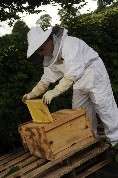 CALMING: Ian Glastonbury with one his hives