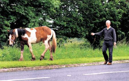 SLOWLY, SLOWLY: A horse is coaxed back to safety after it was grazing on the edge of the Old Raglan to Abergavenny Road ML_13096