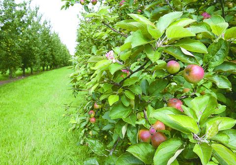 Trevethin to get community orchard