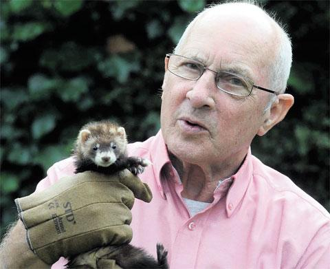 SURPRISE FIND: Haydn Williams with Bonnie the ferret, found in the attic of a house in Pentwynmawr, near Pontllanfraith, where his brother lives
