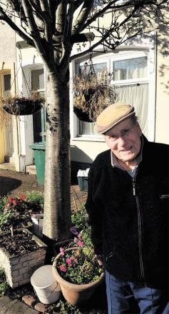 HONOURED: Arthur Collett, 90, of Argyle Street, Crindau, with the ash tree he decorates