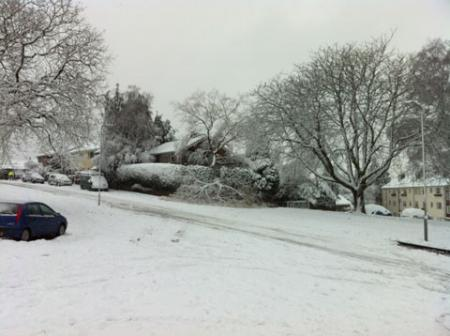 Heavy snow has caused this tree to fall into the street at Rembrandt Way, St Julians, Newport from Sarah Wigmore