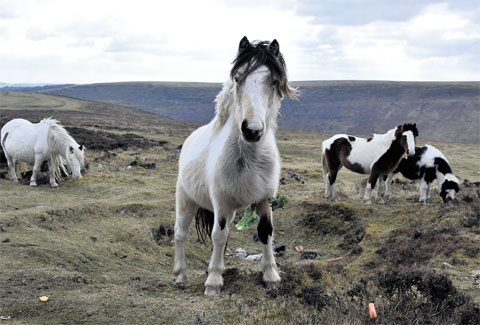 Homes found for abandoned horses