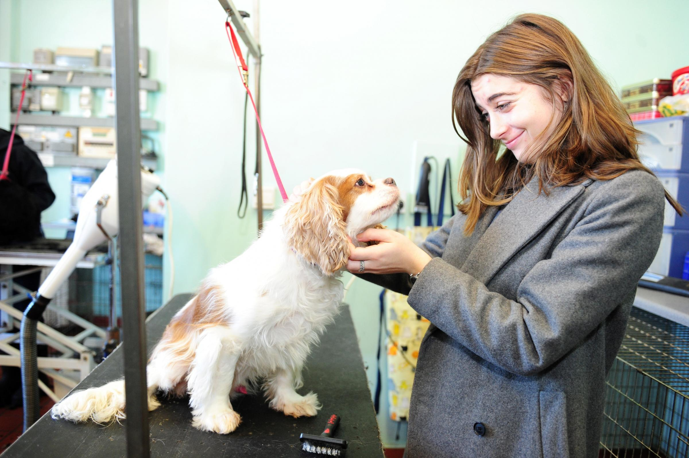 WORK EXPERIENCE: Our reporter Sophie is a dog groomer for the day