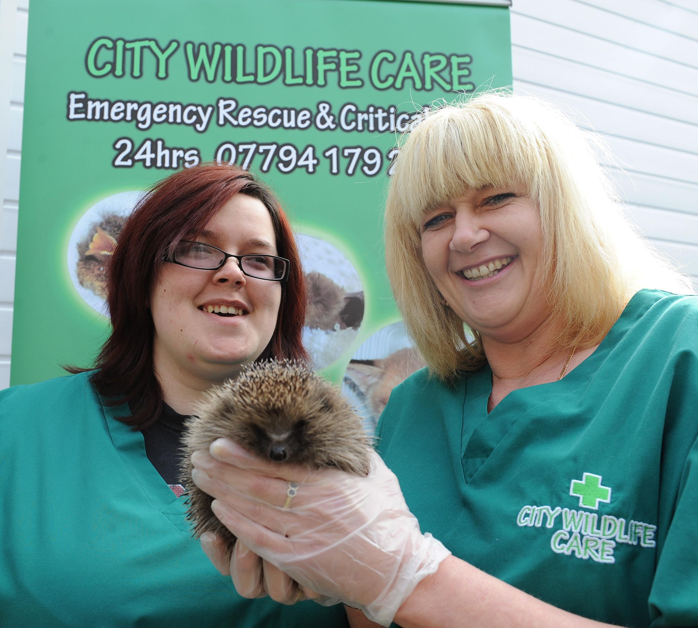 Lucy Boardman (L) and Sharon Swithin with a hedgehog at the City Wildlife trust in Newport who are under threat due to a funding crisis. (4602835)