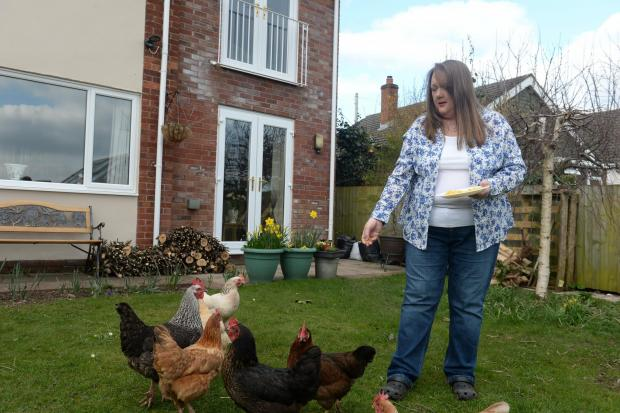 South Wales Argus: Kathy Jones, a former journalist, keeps several chickens at her home. Pictured is Kathy at home in Abergavenny feeding her chickens. (4506315)