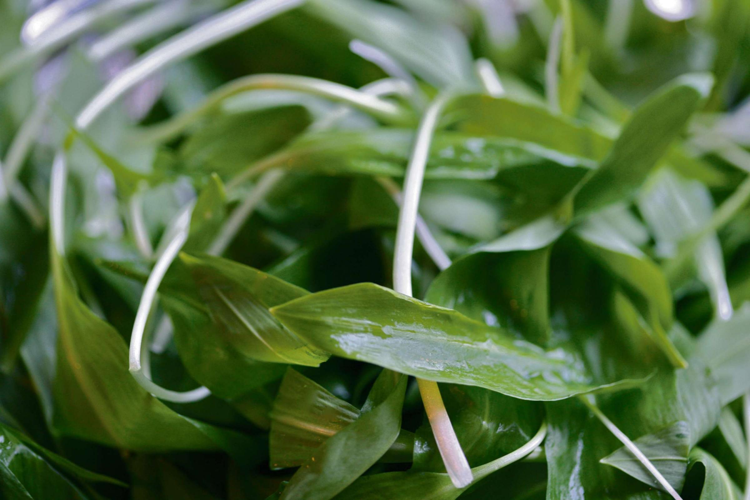 IT'S THE WEEKEND: Fantastic ways with wild garlic