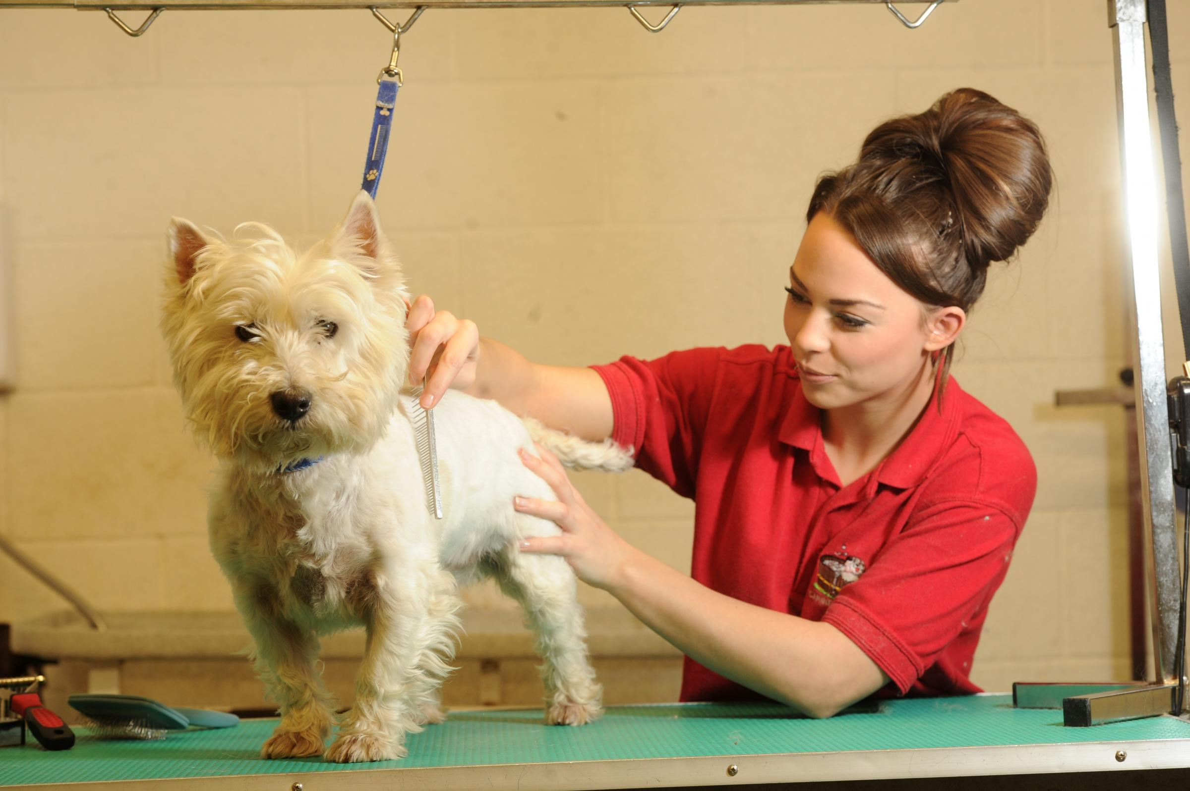 Newport dog groomer hoping for X Factor success