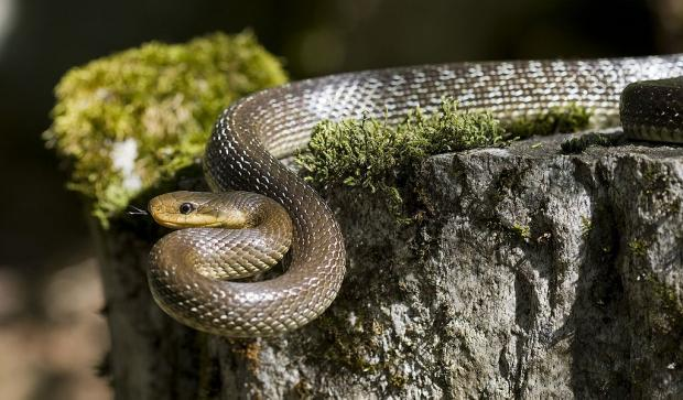 South Wales Argus: STOLEN: A four-foot snake was taken from a Newport pet shop