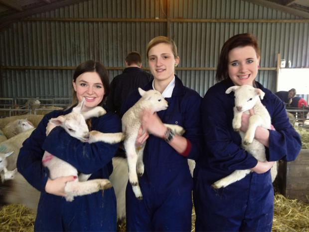 WARM WELCOME: Coleg Gwent students  Molly Bergum, 17 from Caerleon, Georgina Irving, 17 from Undy and Beth Docker, 17 from Newport with pet lambs in the college's lambing shed