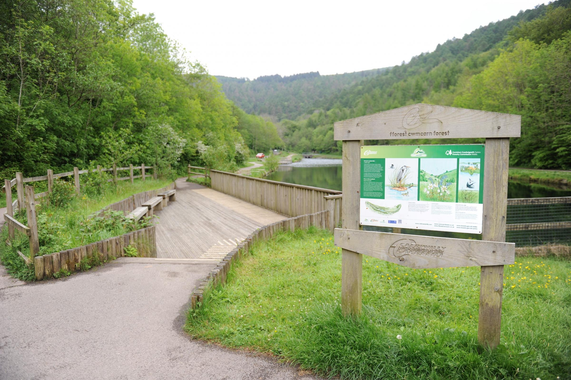 Cwmcarn Forest Drive - 'Nothing has hit British forestry like this before'