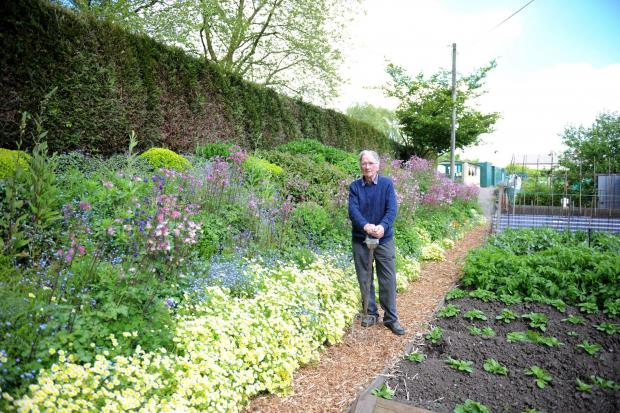South Wales Argus: Keen gardener Allan Johnston aged 79, has been tending to an area on the St Julian's allotment now known as Allan's Bank.  Pictured is Allan beside his vegetable plot and flower bank he maintains. (6135030)