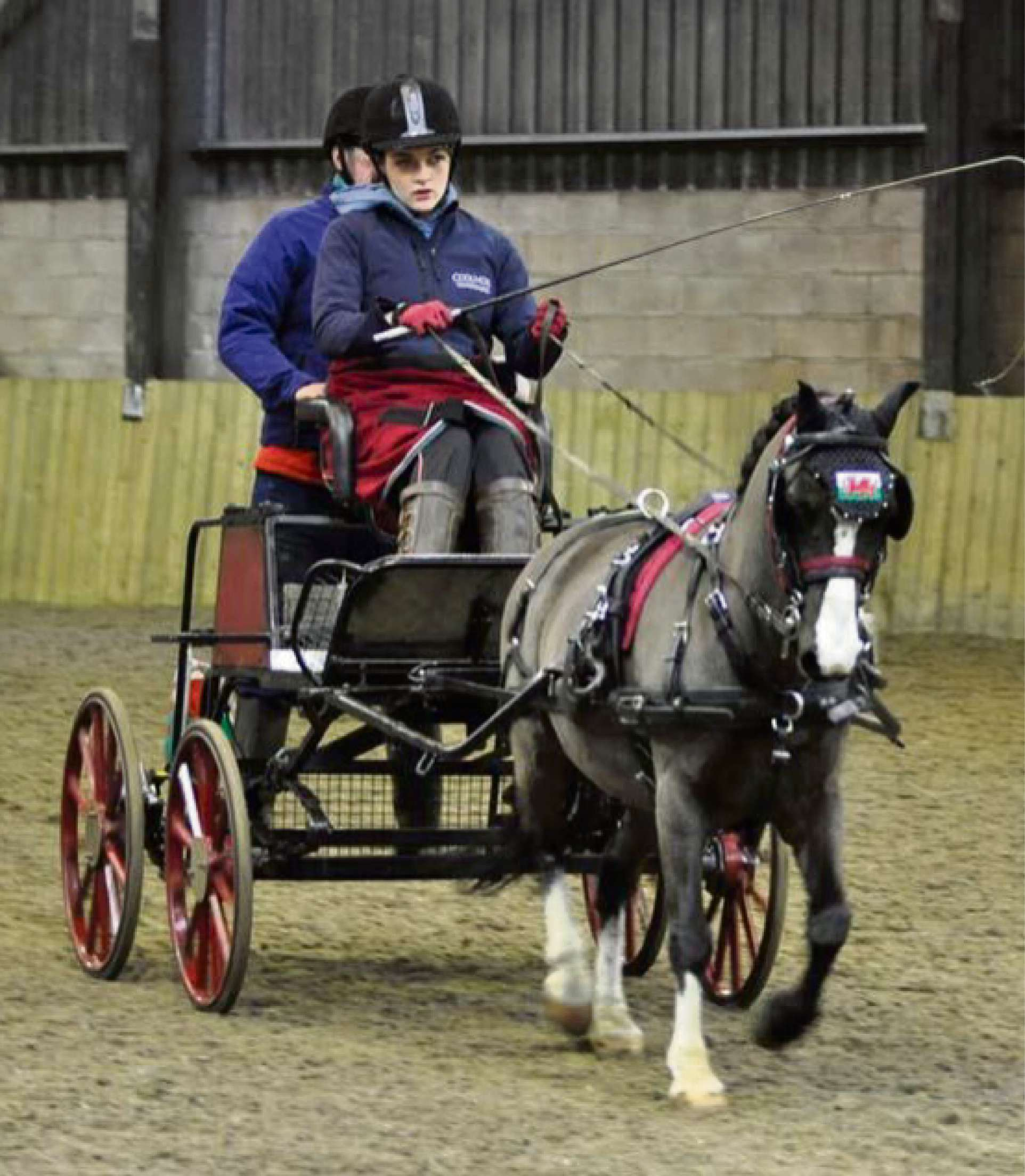 Horse carriage  thefts hit competition hopes