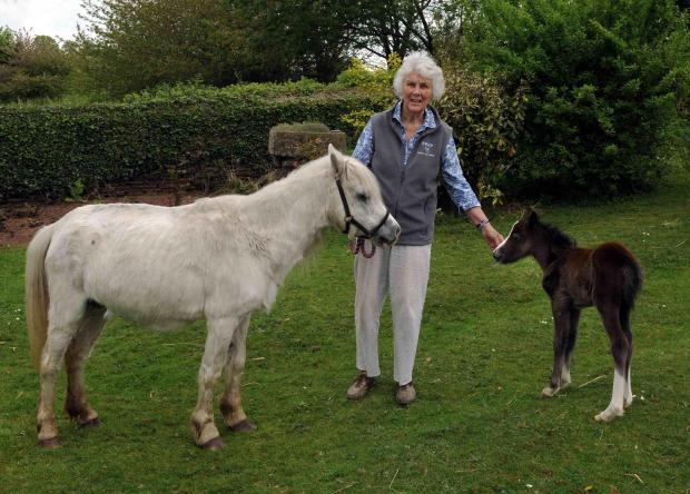 JENNY MACGREGOR, WHO HAD TO DELIVER A FOAL  FOR THE FIRST TIME IN THE MIDDLE OF THE NIGHT AT THE HORSE HOSPITAL IN COXSTONE, NR MONMOUTH. HERE SHE IS WITH MUM, AMY AND FIVE DAY OLD TOD (OK) (9197603)