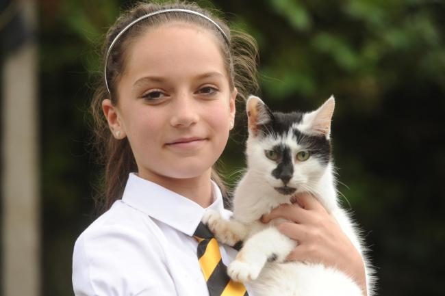 "Mair Davies aged 12 holds ""Ronaldo"" one of two remaining cats after four of the cats belonging to the family have been poisoned in the last week (10894561)"