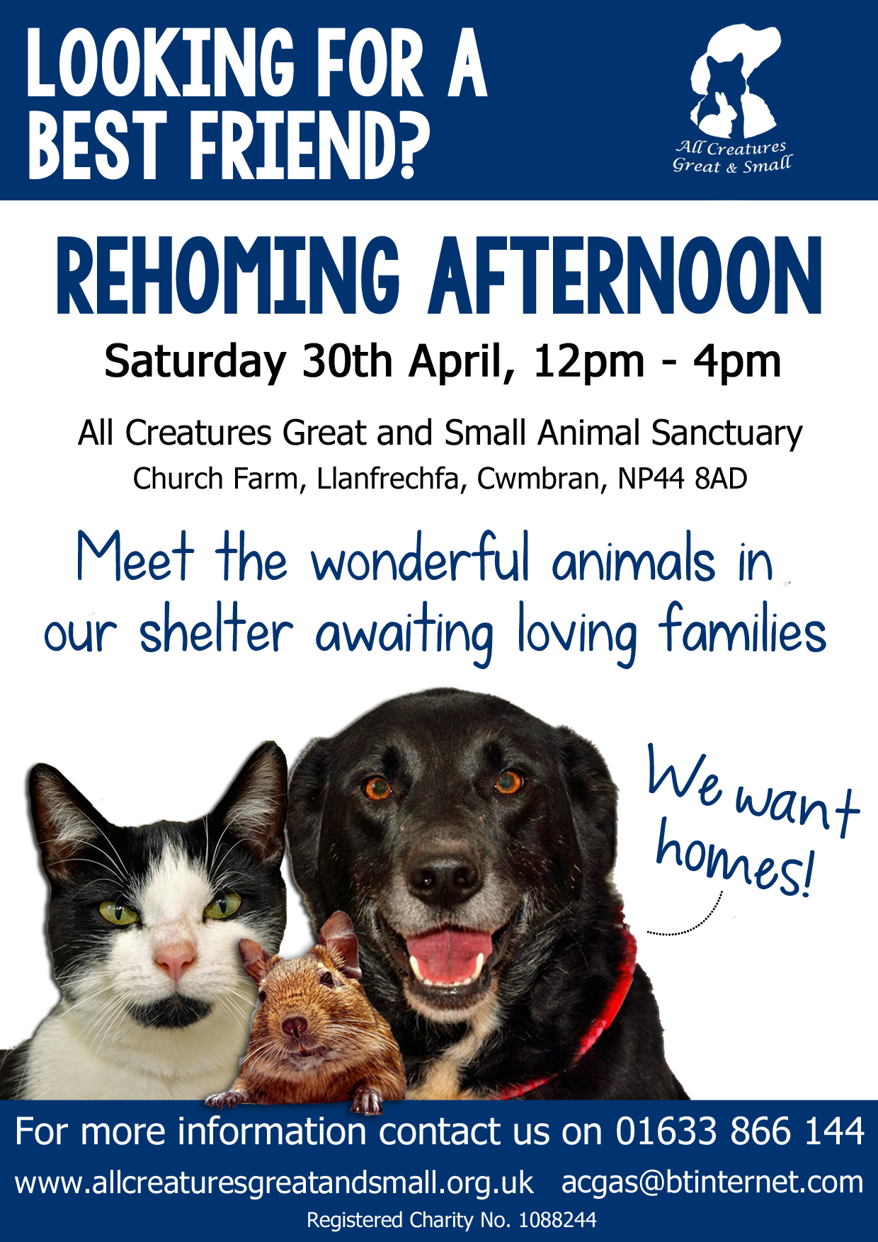 Rehoming Afternoon