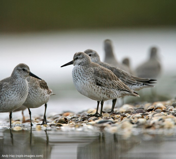 Waders for Beginners Guided walk