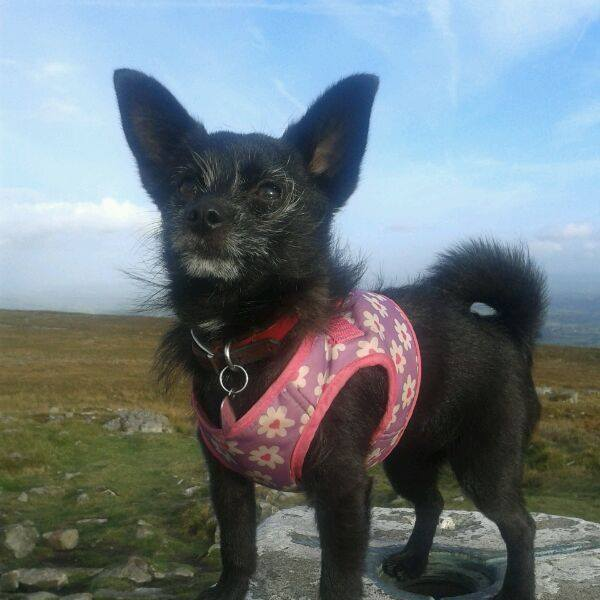 Delight as dog lost on mountain is found safe  From South Wales Argus  South Wales Argus