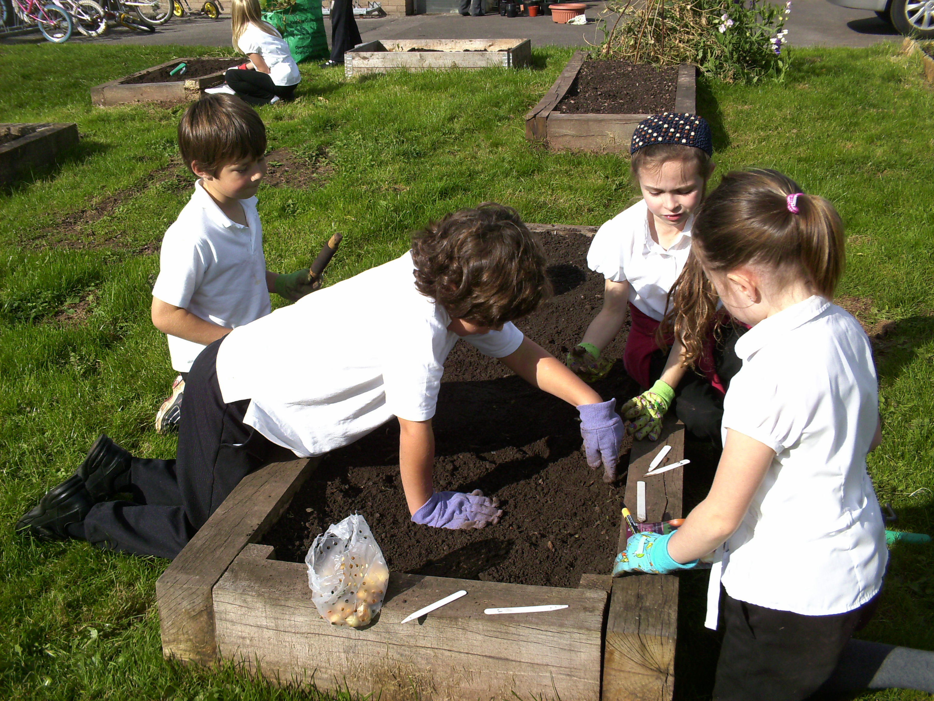 HARD AT WORK: Pupils plant their winning bulbs