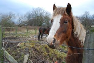 South Wales Argus: Campaign launched to rehome horses