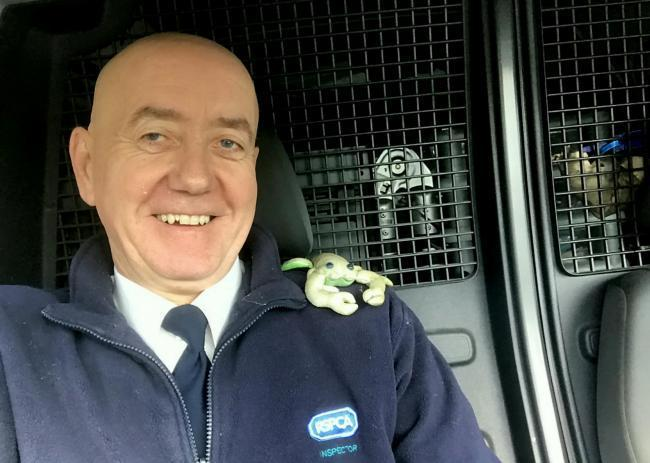 RSPCA inspector Paul Seddon, with the toy. A specially-trained exotic animal hunter was called out to catch a deadly salamander - which turned out to be a child's cuddly TOY.