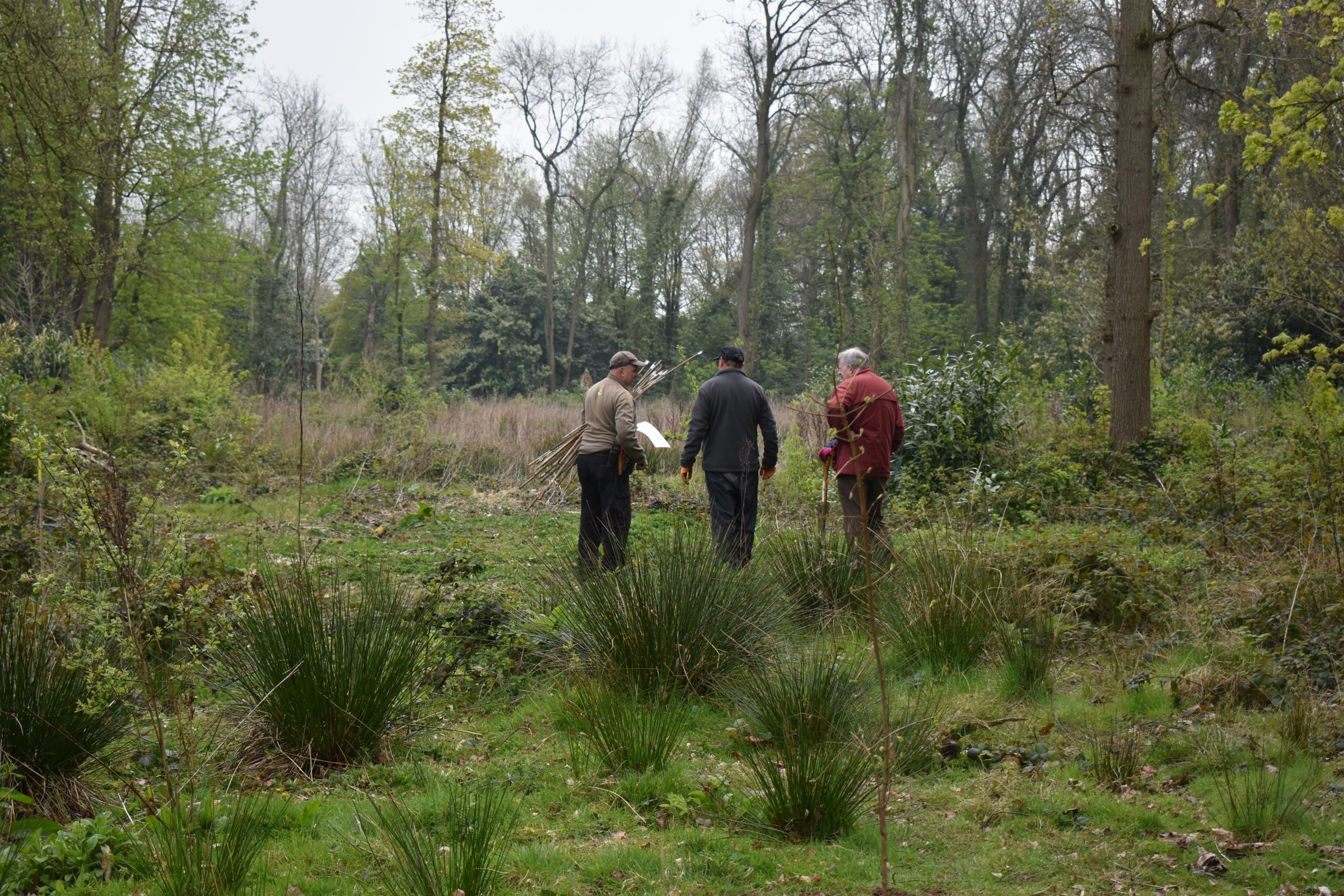 500 trees to be planted in grounds of Tredegar House